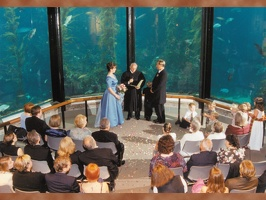 Monterey Bay Aquarium Wedding